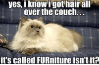 Caturday, Memes, and Couch: yes, I know I gothair all  over the couch.  it's called FURniture isn't it? Good point. it's Caturday..enjoy yourself!