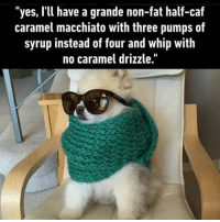 "9gag, Memes, and Starbucks: ""yes, I'll have a grande non-fat half-caf  caramel macchiato with three pumps of  syrup instead of four and whip with  no caramel drizzle. Here's your fatty fat-fat latte with extra whip. Follow @9gag 9gag fluffy starbucks glutenfree pumpkinspicelatte"