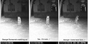 Camera, Images, and Back: Yes...I'm sure..!  George! Someone's watching us!  11/13/2018  George! Come back here...!  11/13/2018 09:48 36PM  11/13/2018 My Neighbor posts images from his trail camera. It cracks me up, he gives them conversations.