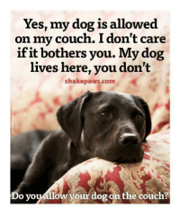 Memes, Couch, and 🤖: Yes, my dog is allowed  on my couch. I don't care  if it bothers you. My dog  lives here, you don't  shakepaws.com  Do youallow your dog on the couch?