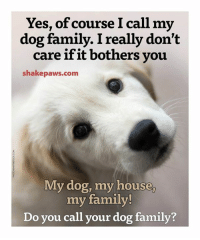 Memes, My House, and 🤖: Yes, of course I call my  dog family. I really don't  care if it bothers you  shake paws.com  My dog, my house  my family!  Do you call your dog family?