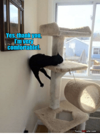 Yes Thank You: Yes, thank you,  I'm very  comfortable!  funnyCATsite.com
