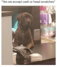 """Head, Humans of Tumblr, and Yes: """"Yes we accept cash or head scratches"""""""