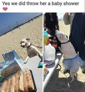 Dog Memes Of The Day 32 Pics – Ep50 #animalmemes #dogmemes #memes - Lovely Animals World: Yes we did throw her a baby shower  CocaCola  baby Dog Memes Of The Day 32 Pics – Ep50 #animalmemes #dogmemes #memes - Lovely Animals World
