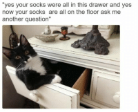 "Memes, 🤖, and Another: ""yes your socks were all in this drawer and yes  now your socks are all on the floor ask me  another question"""
