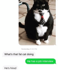 He's fluffy not fat @ship 😹😻: Yesterday 9:50 PM  What's that fat cat doing  He has a job interview  He's hired He's fluffy not fat @ship 😹😻
