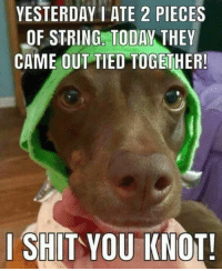 20 Funny Animal Pictures: YESTERDAY I ATE 2 PIECES  OF STRING. TODAY THEY  CAME OUT TIED TOGETHER!  I SHIT YOU KNOT! 20 Funny Animal Pictures