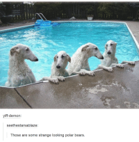 Yiffe: yiff-demon:  see ethestarsablaze:  Those are some strange looking polar bears.