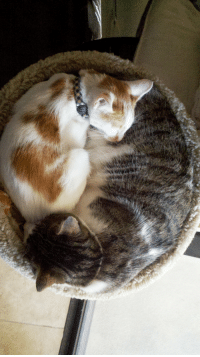 Aww, Little, and And: yin and little yang
