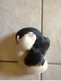 Yin and Yang, And, and Yang: Yin and Yang