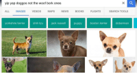 "Books, Memes, and News: yip yap doggos not the woof bork ones  ALL IMAGES VIDEOS MAPS NEWS BOOKS FLIGHTS  SEARCH TOOLS  yorkshire terrier  shih tzu jack russell  puppyboston terrierdoberman <p>wee lil doggos via /r/memes <a href=""http://ift.tt/2oV9zEj"">http://ift.tt/2oV9zEj</a></p>"