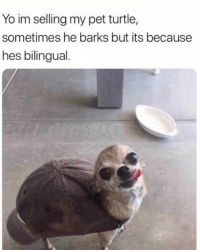 Lol, Yo, and Turtle: Yo im selling my pet turtle,  sometimes he barks but its because  hes bilingual. Lol