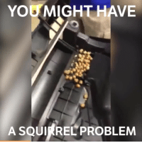 Wow, this is nuts 👀 🌰 📹:Matt Blew: YOG MIGHT HAVE  A SQUIRREL PROBLEM Wow, this is nuts 👀 🌰 📹:Matt Blew