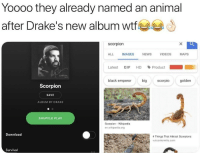 Drake, Gif, and News: Yooo0 they already named an animal  after Drake's new album wtf  scorpion  ALL IMAGES NEWS VIDEOS MAPS  Latest GIF HD、Product  black emperor bigcorpio golden  Scorpion  SAVE  ALBUM BY DRAKE  SHUFFLE PLAY  Scorpion-Wikipedia  en.wikipedia.org  Download  4 Things That Attract Scorpions  vulcantermite.com  Survival