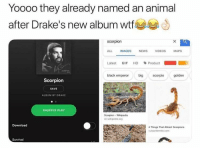 Drake, Gif, and News: Yoooo they already named an animal  after Drake's new album wtt  scorpion  ALL IMAGES NEWS VIDEOS MAPS  Latest GIF HD 、Product ■  black emperor big scorpio golden  Scorpion  SAVE  ALBUM BY DRAKE  SHUFFLE PLAY  Scorpion - Wikipedia  en wikipedia.org  Download  4 Things That Attract Scorpions  Survival