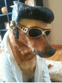 You ain't nothin but a hound dog: You ain't nothin but a hound dog