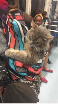 Love, Subway, and Train: You all love pupper on the subway but how about cat in a pack