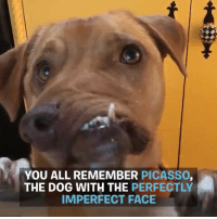Dogs, Memes, and Picasso: YOU ALL REMEMBER PICASSO,  THE DOG WITH THE PERFECTLY  IMPERFECT FACE Picasso and Wacku are two dogs with perfectly imperfect faces ❤️❤️ @picassothewonkyandwacku @luvabledogrescue picasso wacku wonky rescue