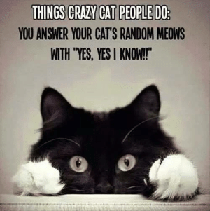 Cats, Memes, and 🤖: YOU ANSWER YOUR CAT'S RANDOM MEOWS  WITH YES, YES I KNOW!!
