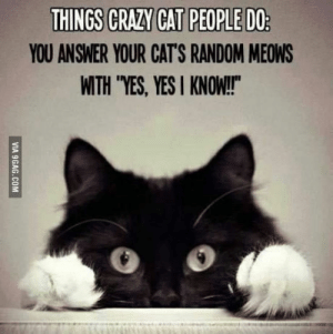 "Its true: YOU ANSWER YOUR CAT'S RANDOM MEOWS  WITH ""YES, YESI KNOW!  0 o Its true"