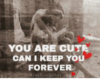Cute, Love, and Memes: YOU ARE CUTE  CAN I KEEP YOU  FOREVER  Like Love Quotes c You are cute. Can I keep you forever?