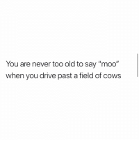 """Everyone go follow @downinthedms.ig: You are never too old to say """"moo""""  when you drive past a field of cows Everyone go follow @downinthedms.ig"""