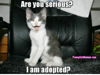 Funny Cat Memes: you Are seriouso  FunnyCatMemes.xyz  I am adopted Funny Cat Memes