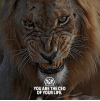 "Anaconda, Life, and Memes: YOU ARE THE CEO  OF YOUR LIFE. You are 100% responsible for your life; its happiness; its wealth and health. You choose the ""Executive Officers,"" also known as the people who will support and help you the best way they can throughout your life. 🔥 As the CEO of your life, you have the ability and the authority to make the important decisions in it. Your life is the organization and as such will have different departments: accounting, marketing, or contracting department. The departments are present to aid the organization to run smoothly; and, if something unfavorable should occur, they are there to help and protect the organization; and these departments have an interdependent relationship. So, for a moment, think about how this applies to your life. You have people in your lives who are present to support and protect you. 💯 - ceo motivation millionairementor"
