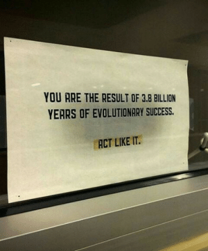 Evolutionary: YOU ARE THE RESULT OF 3.8 BILLION  YEARS OF EVOLUTIONARY SUCCESS.  ACT LIKE IT.