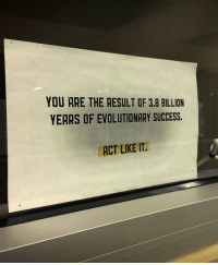 <p>Spotted In The Window Of A Biology Professor Office.</p>: YOU ARE THE RESULT OF 3.8 BILLION  YERRS OF EVOLUTIONARY SUCCESS.  ACT LIKE IT. <p>Spotted In The Window Of A Biology Professor Office.</p>