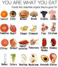 Follow 👉🏽 @veganmomlifestyle It's not a coincidence that these foods resemble the area of the body that it can help to heal. God has perfectly designed food to heal our bodies and keep our bodies healthy. As you eat more real food you will see the change in your body. This is how we really fight sickness and disease. Follow @veganmomlifestyle - click the link in her bio for FREE resources.: YOU ARE WHAT YOU EAT  Foods that resemble organs they're good for  Carrot Eyes Wanut Brain Grapes Lungs  Tomatoe Heart Ginger Stomach Figs Strotum  Sweet  Citrus Breast potatoe Pancreas Kidney Kidney  Beans  Bories Celery Hearing Hushroom Avocado Uterus Follow 👉🏽 @veganmomlifestyle It's not a coincidence that these foods resemble the area of the body that it can help to heal. God has perfectly designed food to heal our bodies and keep our bodies healthy. As you eat more real food you will see the change in your body. This is how we really fight sickness and disease. Follow @veganmomlifestyle - click the link in her bio for FREE resources.
