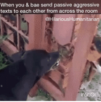 Shits getting real heated in this living room right now 😂 thumbs are on fire! 📱 HilariousHumanitarian videos video meme dogs tagyourfriends relationship friendship text fml lmao relatable funny hilarious allofus relationshipgoals kidding jokes dontdothis vines memes dude nochill lit lcsw msw: you & bae send passive aggressive  texts to each other from across the room  Hilarious Humanitarian  Made with  InshOt Shits getting real heated in this living room right now 😂 thumbs are on fire! 📱 HilariousHumanitarian videos video meme dogs tagyourfriends relationship friendship text fml lmao relatable funny hilarious allofus relationshipgoals kidding jokes dontdothis vines memes dude nochill lit lcsw msw