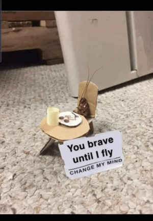 Brave, Change, and Mind: You brave  until I fly  CHANGE MY MIND Oh, the potential mayhem…