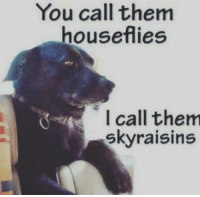 Good, Dank Memes, and Boy: You call them  houseflies  I call them  skyraisins VEry good boy @animalsdoingthings