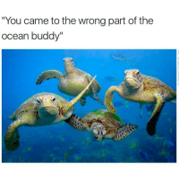 "Memes, 🤖, and Turtles: ""You came to the wrong part of the  ocean buddy"" Awe turtles Ha ha. I'm weak flatlined dead pettypost nochill teamnoharmdone noharmdone"