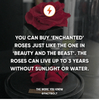 😍 Ooh! — 🌹 It's sold by a UK floral company called Forever Rose. Forever roses are natural flowers that can live with no water of sunlight needed when kept in its protective glass dome.: YOU CAN BUY ENCHANTED'  ROSES JUST LIKE THE ONE IN  BEAUTY AND THE BEAST THE  ROSES CAN LIVE UP TO 3 YEARS  WITHOUT SUNLIGHT OR WATER.  THE MORE YOU KNOW  @FACTBOLT 😍 Ooh! — 🌹 It's sold by a UK floral company called Forever Rose. Forever roses are natural flowers that can live with no water of sunlight needed when kept in its protective glass dome.