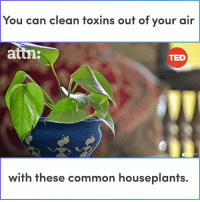 Memes, Ted, and Common: You can clean toxins out of your air  attn  TED  with these common houseplants. You can clean toxins out of your air with these common houseplants.