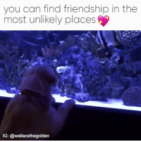 Unlik: you can find friendship in the  most unlikely places  IG: @wallacethegolden
