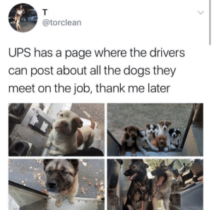 You can follow the UPS Dogs blog here: You can follow the UPS Dogs blog here