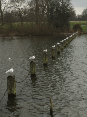 You can never have too many seagull posts.: You can never have too many seagull posts.
