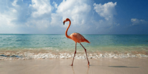 Bahamas, Can, and The Bahamas: You Can Now Get Paid to Hang Out With Flamingos in the Bahamas