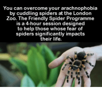 Friends, Life, and Memes: You can overcome your arachnophobia  by cuddling spiders at the London  Zoo. The Friendly Spider Program  is a 4-hour session designed  to help those whose fear of  spiders significantly impacts  their life. Oh, a 4 hour session of NOPE! 😲