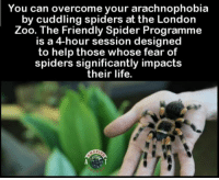 Friends, Life, and Memes: You can overcome your arachnophobia  by cuddling spiders at the London  Zoo. The Friendly Spider Programme  is a 4-hour session designed  to help those whose fear of  spiders significantly impacts  their life.  AZI Oh, a 4 hour session of NOPE! 😲