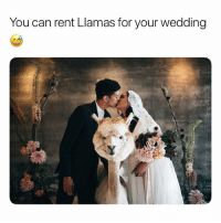 Funny, Memes, and Animal: You can rent Llamas for your wedding Follow my backup @petroom for more animal memes - - Cr @weddingllamas