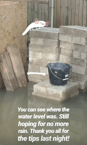 Am I the only one concerned about the fact that pewds house is being flooded by sewer water? Sending positive vibes his way to make the water go away.: You can see where the  water level was. Still  hoping for no more  rain. Thank you all for  the tips last night! Am I the only one concerned about the fact that pewds house is being flooded by sewer water? Sending positive vibes his way to make the water go away.