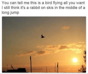I still think by Holofan4life FOLLOW 4 MORE MEMES.: You can tell me this is a bird flying all you want  I still think it's a rabbit on skis in the middle of a  long jump I still think by Holofan4life FOLLOW 4 MORE MEMES.