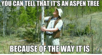 Aspen, Tree, and Girl Memes: YOU CAN TELL THATITS AN ASPEN TREE  BECAUSE OF THE WAY ITIS When teachers ask me to explain my answer https://t.co/INVrayIMn0
