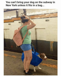 Memes, New York, and Subway: You can't bring your dog on the subway in  New York unless it fits in a bag...  I45  145  145 Looks legit. | Follow @aranjevi for more!