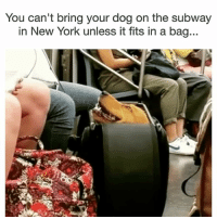 Make it happen human | More 👉 @miinute: You can't bring your dog on the subway  in New York unless it fits in a bag.. Make it happen human | More 👉 @miinute