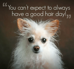 thetsunamifan:  Maybe its time to get your hair in order! If you have also hair like that try to make spiral perms! Reblog this if you think this dog is cute ! <3 Just look at those puppy eyes :P: You can't expect to always  have a good hair day!,, thetsunamifan:  Maybe its time to get your hair in order! If you have also hair like that try to make spiral perms! Reblog this if you think this dog is cute ! <3 Just look at those puppy eyes :P